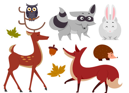 forrest: Illustration of Animals Commonly Found in the Woods