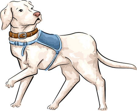 guide: Sketchy Illustration of a Cute and Fluffy Guide Dog