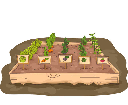 vegetable garden: Illustration of a Garden with a Raised Box Marked with Labels Stock Photo