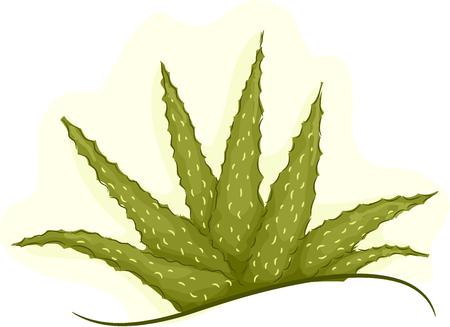 aloe vera plant: Illustration of a Cluster of Healthy Aloe Vera Plant