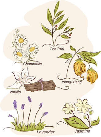 tea tree: Illustration Featuring the Flowers of Different Herbal Plants