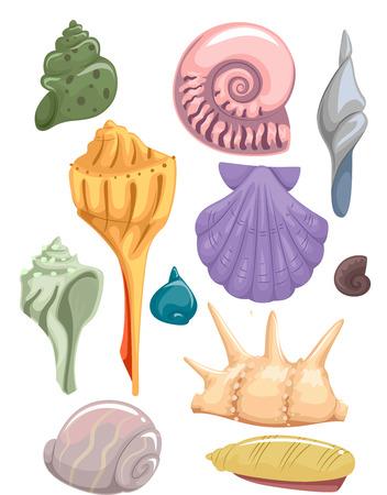 clam illustration: Illustration Set Featuring Different Types of Seashells