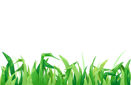 grass blades: Background Illustration Featuring Fresh Grass Forming a Border Stock Photo