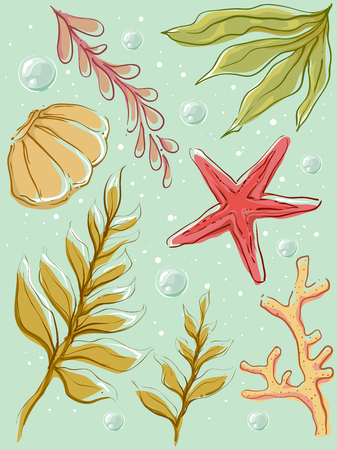 marine scene: Colorful Illustration of Different Types of Seaweeds