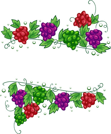 red grape: Illustration of Grapes Design Elements