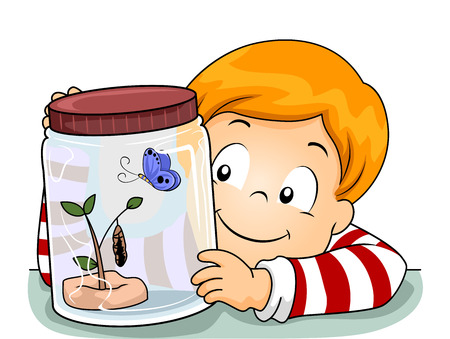 life cycle: Illustration of a Little Boy Observing the Life Cycle of a Butterfly