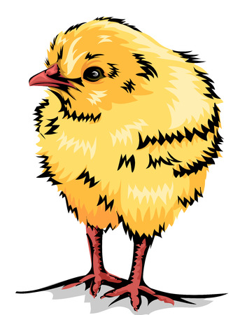 homestead: Animal Illustration of a Cute Yellow Chick Stock Photo