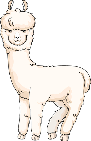 white coat: Animal Illustration of a Cute Furry Alpaca with Thick White Coat Looking Back Stock Photo