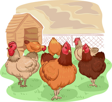 Animal Illustration of Different Breeds of Free Range Chicken Wandering Around in Search of Food