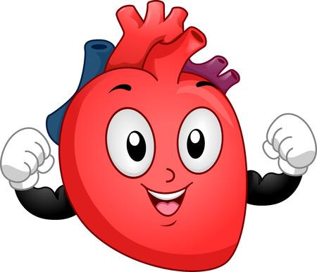 human heart: Mascot ejemplo de un corazón humano sano que dobla su bíceps para mostrar la fuerza