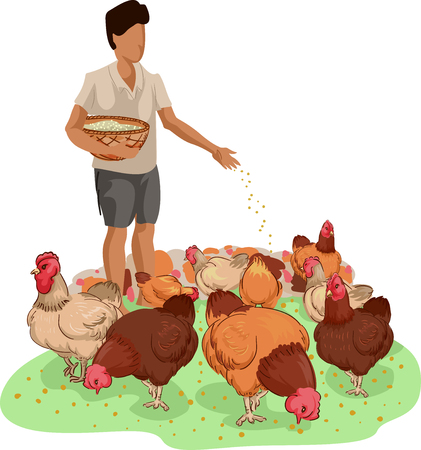 Illustration of a Farm Boy Carrying a Basket of Feeds While Feeding Free Range Chickens