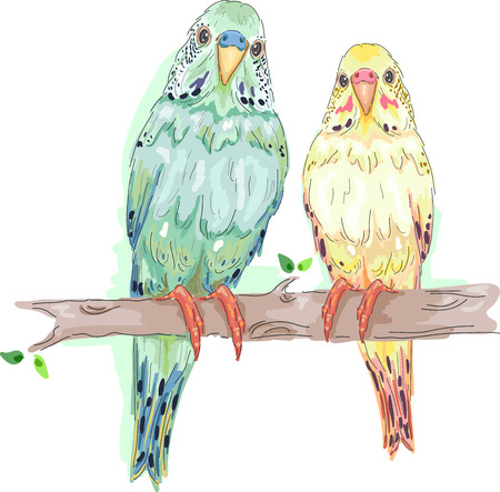 mating: Animal Illustration Featuring a Pair of Parakeets Perched Side by Side on a Tree Branch Stock Photo