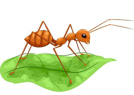 ant leaf: Ilustración de los animales con un gran fuego derechos de la hormiga en una hoja verde