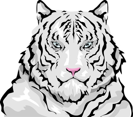 white coat: Animal Illustration Featuring a Large Siberian White Tiger with Thick, Fluffy Coat Stock Photo