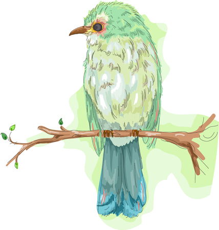 vertebrate: Animal Illustration Featuring a Colorful Bird Perched on a Tree Branch