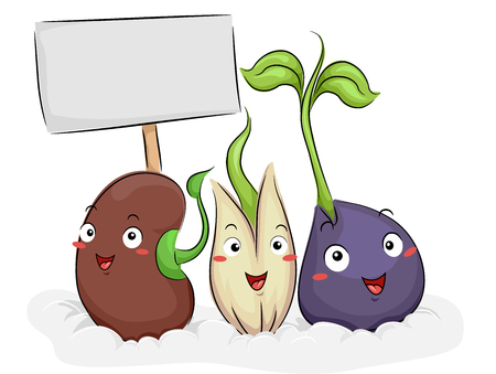 germination: Colorful Illustration Featuring Happy Seed Mascots Demonstrating the Germination Process
