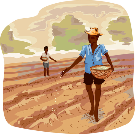 cultivated: Illustration of a Farmer Carrying a Basket Scattering Seeds as He Move Around Rows of Cultivated Soil