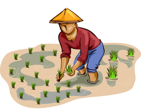Illustration of a Farmer in a Conical Hat Planting Rice Stalks on an Irrigated Rice Field 스톡 콘텐츠