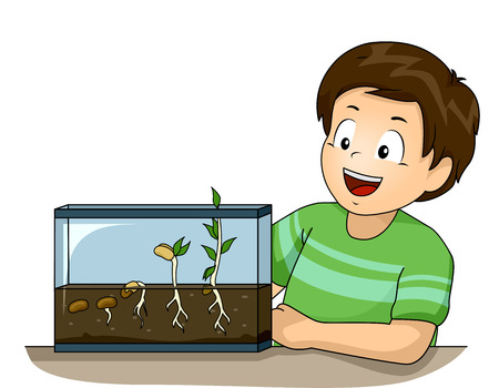 glee: Illustration of a Cute Little Boy Observing His Germination Experiment with Glee