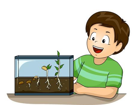 germinación: Ilustración de un niño pequeño lindo observar su experimento de germinación con Glee Foto de archivo