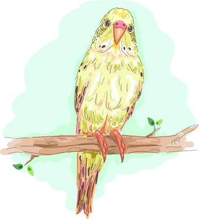 staring: Animal Illustration of a Colorful Budgie Perched on a Branch Staring Curiously Stock Photo