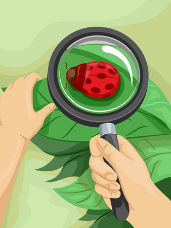 ladybird: Colorful Illustration Featuring a Man Examining a Ladybug With a Magnifying Glass