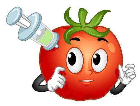 Illustration of a Tomato Mascot Being Injected with Something. GMO Tomato Stock Photo
