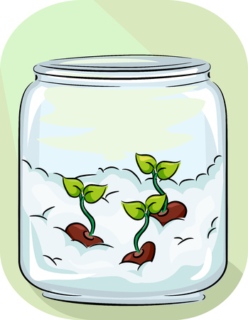 Illustration of Germinated Seeds on Cotton inside a Bottle