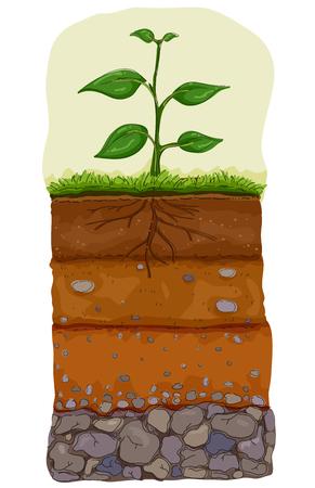 Illustrazione di cinque strati di terreno sotto una pianta. Organico, terriccio, sottosuolo, materiale genitore e substrato roccioso Archivio Fotografico