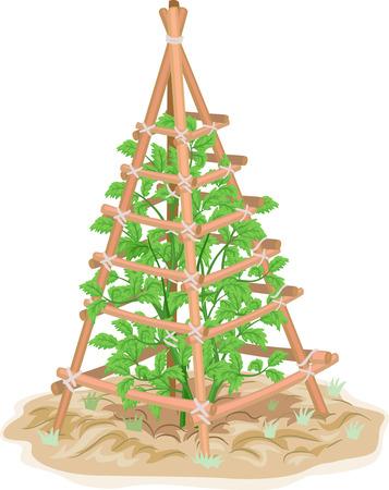 Illustrazione di un tronco di legno che supporta una pianta di pomodoro