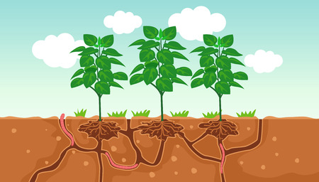 Illustration of Plants and the Air and Water Passage In the Soil Created by Worms Banque d'images - 118700638