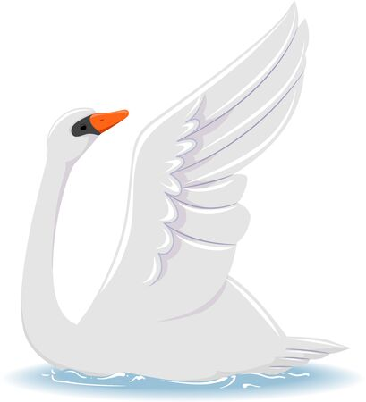 Illustration of a Mute Swan with Its Wing Up Banco de Imagens