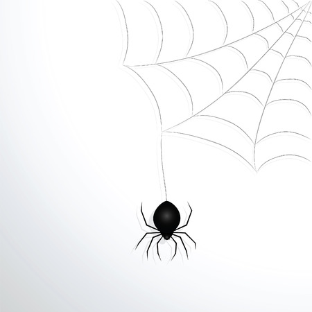 spider web: Spider web and spider. Vector illustration.