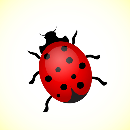 ladybird: Vector illustration of a ladybird.