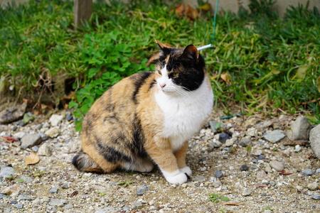 cutie cat Stockfoto