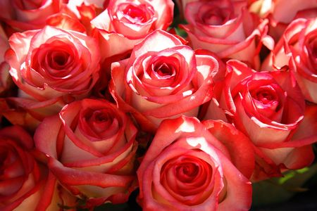 Background from bright decorative garden roses