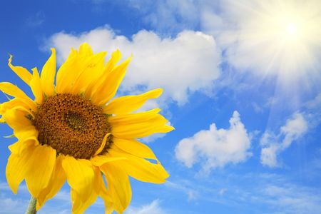 big sunflower against the blue sky with clouds Stock Photo - 5376210