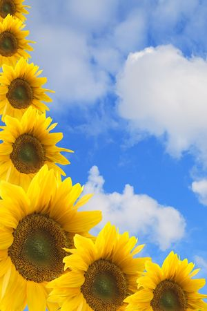 Framework from colours of a sunflower against the sky Stock Photo - 5420653