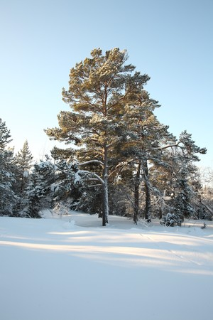 Beautiful winter landscape with snow-covered trees. photo