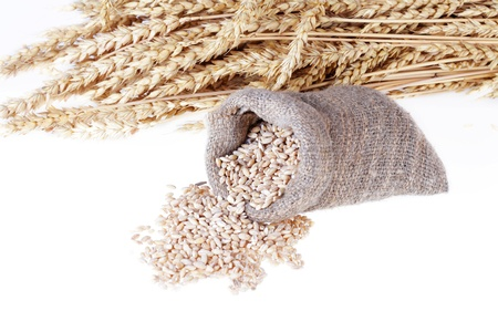Bag with grain and wheat ears on a white background. It is isolated photo