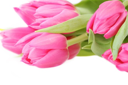Bouquet of pink tulips isolated on a white background photo