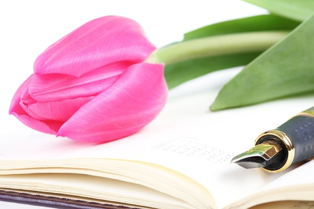 pink tulip lies on an open writing-book Stock Photo - 9185089