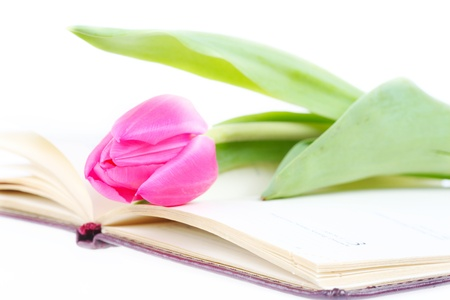 pink tulip lies on an open writing-book Stock Photo - 9185126
