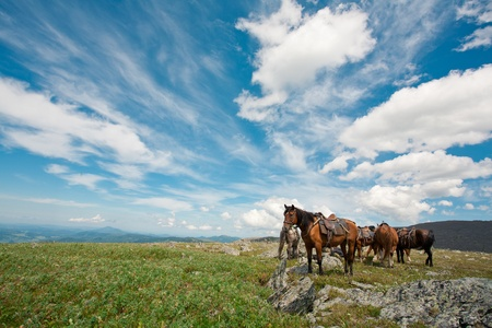harnessed horses against mountains photo