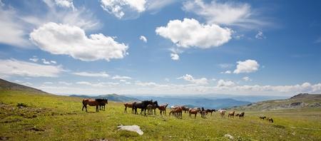 Mountain Altai. A beautiful landscape with ëîøàäüìè and the blue sky. Stock Photo - 10603984