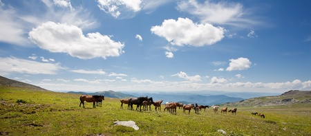 Mountain Altai. A beautiful landscape with �������� and the blue sky. Stock Photo - 10603984