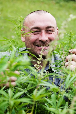 man with glasses in the bush of hemp. Stock Photo - 10718827