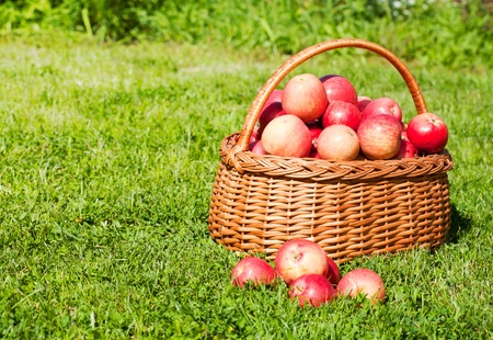 apples basket: basket with red apples costs on a grass