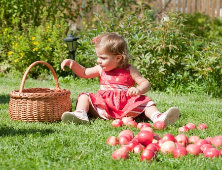 little girl collects the apples scattered on a grass in a basket Stock Photo - 10881814