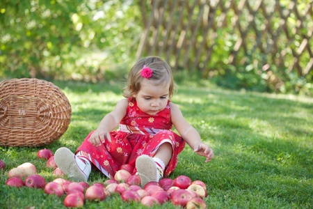 little girl collects the apples scattered on a grass in a basket Stock Photo - 10881819